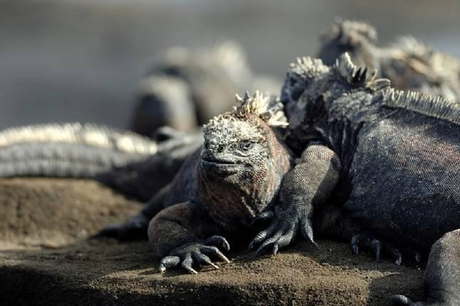 6-Days-Galápagos-Island-Hopping-tour