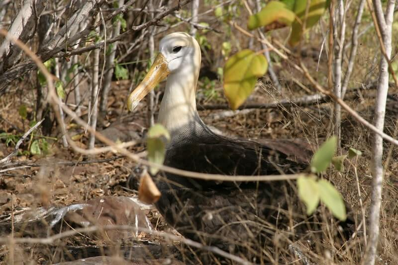 Fly-Galapagos-9 days-unique-Island-hopping-tour