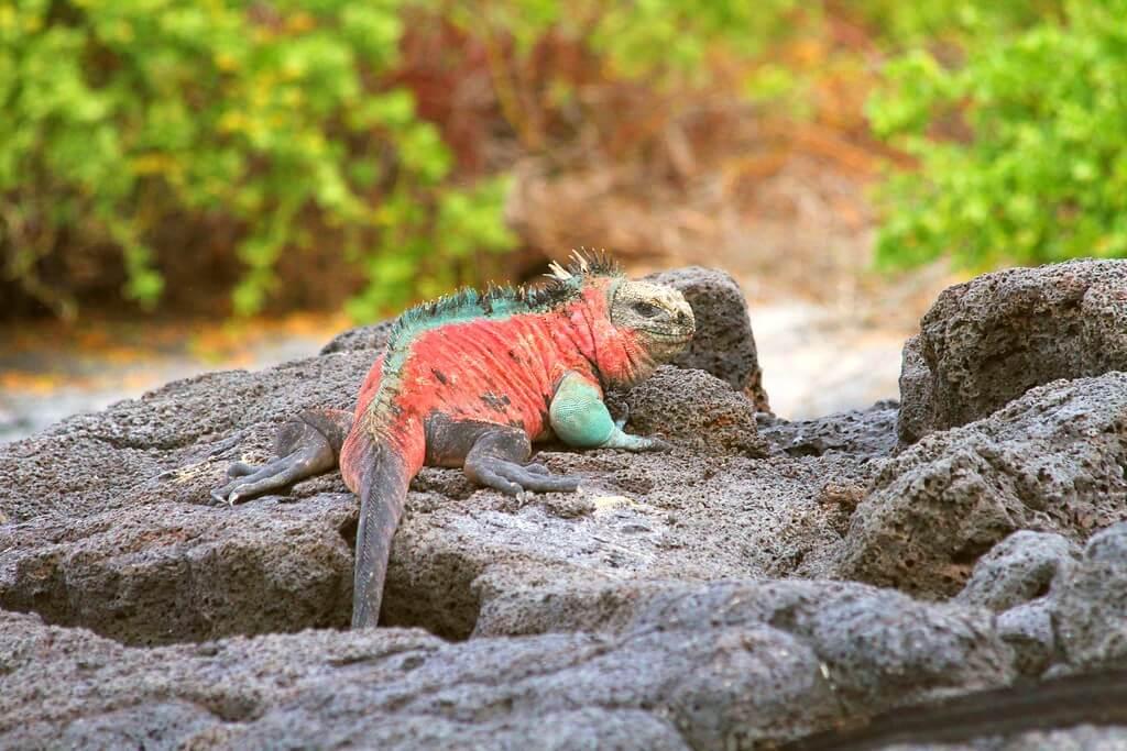 best-of-Galapagos-Big-five-9-days-tour