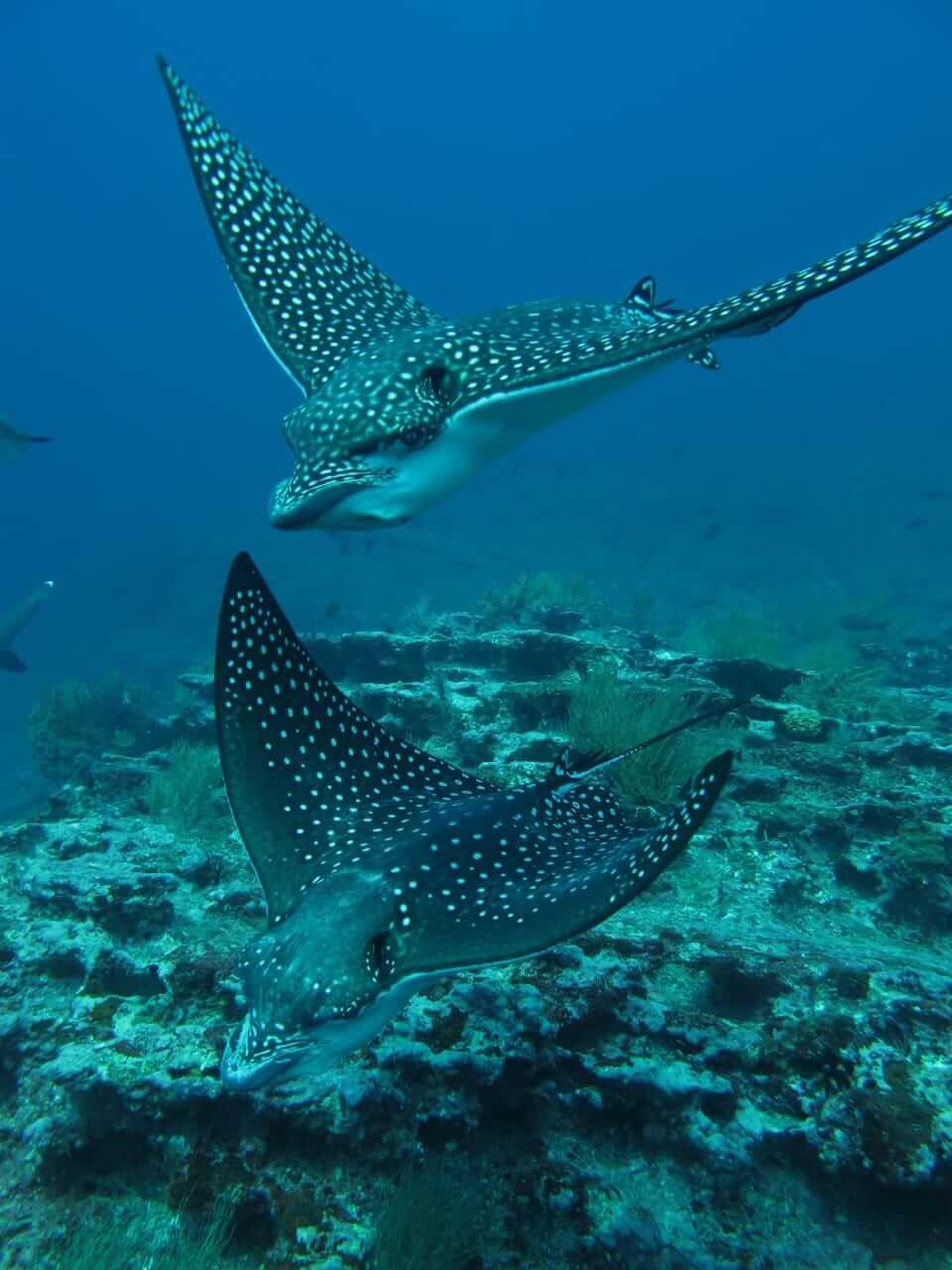 galapagos-diving-7-days-tour