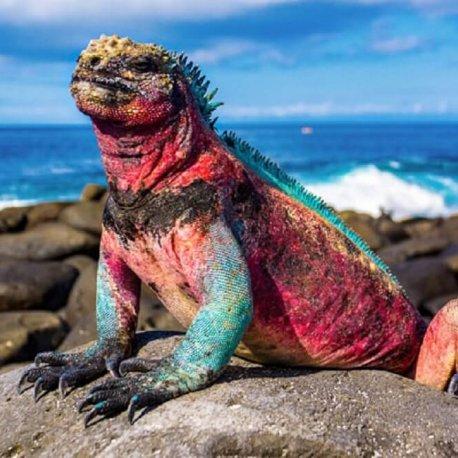 9-Days-Galapagos-Island-Hopping-Tour