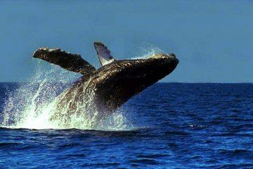 ballena-guidecuador