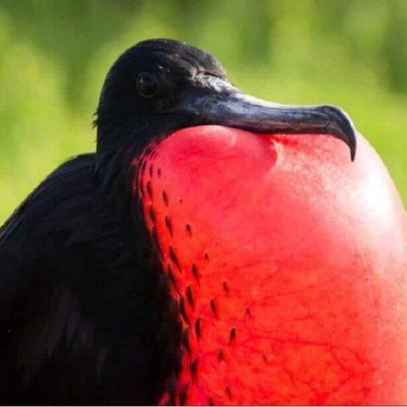 affordable-8-days-galapagos-island-hopping-tour